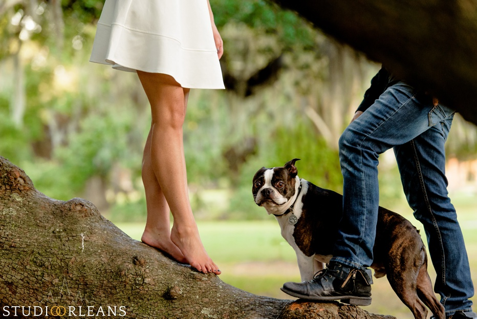 City Park Engagement Session in New Orleans with a couple and their cute dog Taz walking under the amazing Oak trees